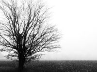 Lonely_tree_2