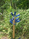 Blue_bottle_tree_broken