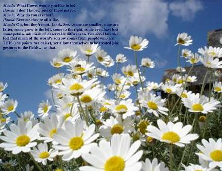 Quotes About Daisies. Daisy Flower Quotes Quotesgram. Cool ...